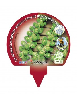 Fresanas Bol de Bruselas plantón ecológico pack 6 unidades