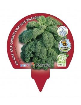 Col Kale plantón ecológico pack 12 unidades 34x32 mm.