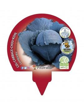 Fresanas Col Lombarda plantón ecológico pack 6 unidades 54x43 mm. de diámetro