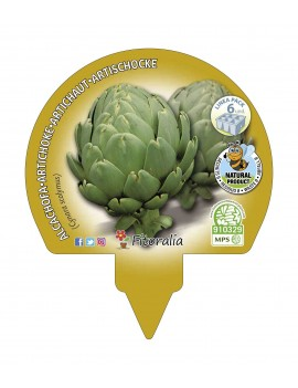 Fresanas Alcachofa plantón ecológico pack 6 unidades 54x43 mm. de diámetro