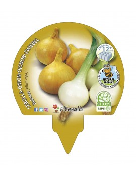 Fresanas Cebolla babosa plantón ecológico pack 12 unidades 34x32 mm. de diámetro