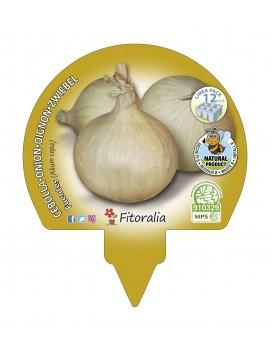 Fresanas Cebolla de Fuentes plantón ecológico pack 12 unidades 34x32 mm. de diámetro