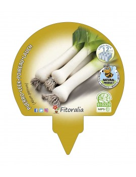 Fresanas Puerro plantón ecológico pack 12 unidades 34x32 mm. de diámetro