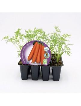 Fresanas Zanahoria plantón ecológico pack 12 unidades 34x32 mm. de diámetro