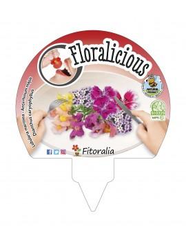 Fresanas Pack flores comestibles Floralicius Mix1 plantón ecológico pack 6 unidades 54x43 mm. de diámetro