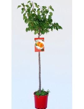 Fresanas Albaricoque bulida ecológico