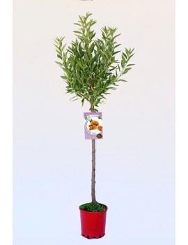 Fresanas Almendro Ferragnes ecológico