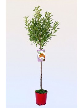Fresanas Almendro Marcona ecológico