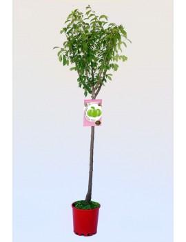 Fresanas Ciruelo Claudia verde ecológico