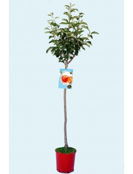 Fresanas Manzano Fuji Ecológico