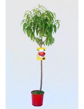 Fresanas Nectarina Venus ecológica