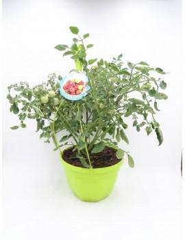 Fresanas airgarden planta de tomate colgante