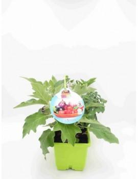 Fresanas Trioh! Huerto,  plantas de tomate, pimiento y berenjena de producción mini
