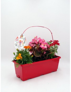 Fresanas trioh de fitoralia floralicious, flores comestibles, begonia, verbena y clavel moro.