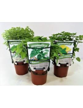 Fresanas Trío plantas antimosquitos