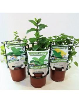 Fresanas trío plantas surtido para mojitos