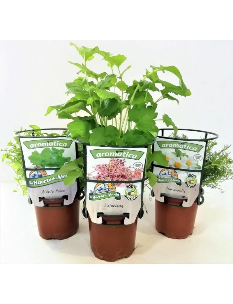 Fresanas trío infusiones bienestar, menta poleo, manzanilla y valeriana