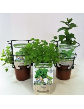 Fresanas trío surtido de plantas aromáticas, perejil, hierbabuena y orégano