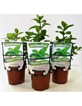 Fresanas, trío de plantas de hierbabuena