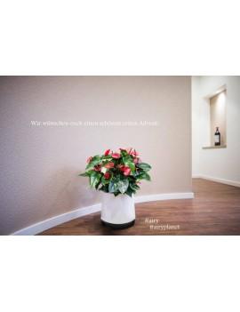 Fresanas jardinera purificadora de aire Airy tamaño M