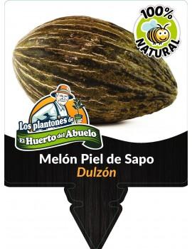 Fresanas planta de melón piel de sapo
