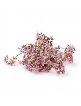 Fresanas valeriana planta aromática natural envío a domicilio