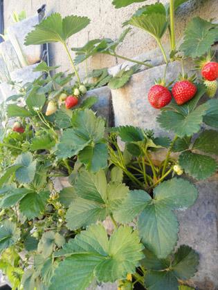 Fresanas jardín vertical