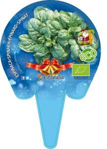 Fresanas Plantón ecológico Espinaca especial Navidad
