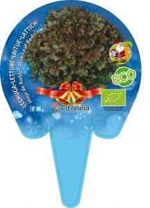 Fresanas Lechuga hoja de roble especial Navidad, plantón ecológico