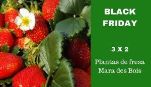 Fresanas Black Friday oferta 3x2 plantas de fresa Mara des Bois