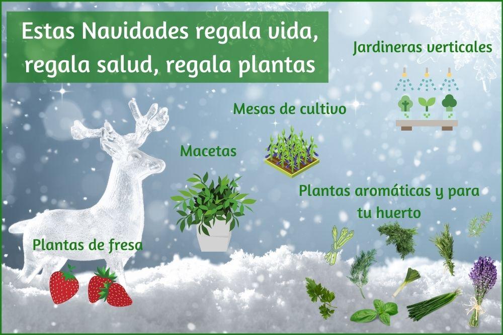 Esta Navidad regala plantas