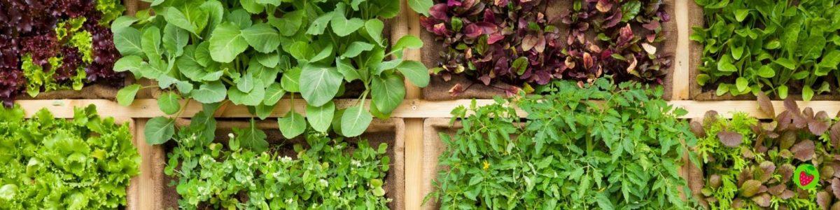 Consejos para una vida sostenible y ecológica