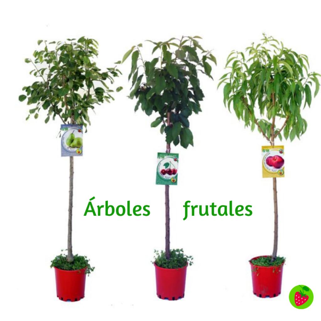 Día del padre árboles frutales