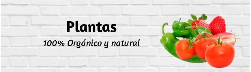Fresanas®: Plantas