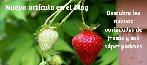 Fresanas blog nuevas plantas de fresa